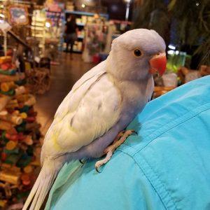Birds Parrots Pet Kingdom